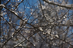 Sparkles  ~ Explore (Karen McQuilkin) Tags: snow sparkles bokeh bluesky snowybranches karenmcquilkin