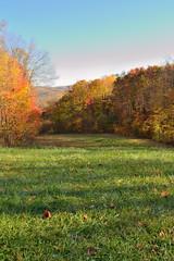 DSC_0144 (Raymond H G) Tags: park autumn light color fall field grass forest landscape maple shadows state pennsylvania foliage trail acer birch ohiopyle betula kentuck