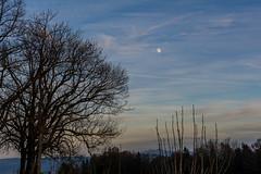 Der Mond ist aufgegangen - Early moonrise (bischofbrigitte) Tags: moon schweiz switzerland evening abend mond suisse baum mondaufgang fnflnderblick grubsg