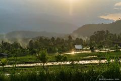 _DSC3963_Bali_09_16 (Saverio_Domanico) Tags: bali indonsie munduk voyage