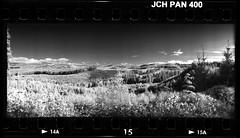 Tree Farmed Landscape 161315 (jimhairphoto) Tags: oregon widelux panorama japancamerahunter jch streetpan 400 infrared 35mm film blackandwhite blancetnoir schwarzeaufweis blancoynegro blancinegre siyahrebeyaz jimhairphoto