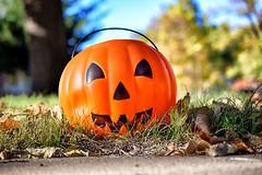 Halloween bucket (slammerking) Tags: halloween lawn yard bucket jackolantern orange bluesky october perspective candy
