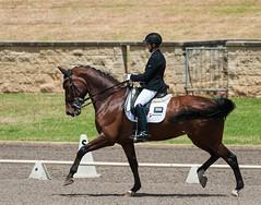 161023_Aust_D_Champs_Sun_Med_4.2_6130.jpg (FranzVenhaus) Tags: athletes dressage australia siec equestrian riders horses performance event competition nsw sydney aus