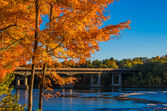 Fall Morning by the Bridge (jennifer.yakeyault) Tags: leaves autumn fall connecticut connecticutriver windsorlockscanalstatepark statepark park bridge landscape outdoors outdoor outside nature natural orange canoneosrebelt6i morning suffield suffieldconnecticut river