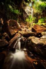 Valle de Mai (Ramn Menndez Covelo) Tags: vall valle valley mai praslin island indian ocean ndico seychelles vertical nature outdoors water waterfall jungle forest bosque jungla naturaleza