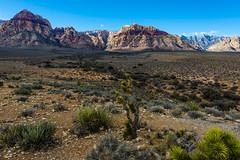 048-RRC160201_47266 (LDELD) Tags: nevada desert rugged dry harsh wild lasvegas redrocknationalconservationarea mountains cliff snow