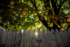 Peeking Through (Bets<3 Fine Artist ~Picturing Light ~ Blessings ~~) Tags: hff fence sun light shadow fall tree autumn leaves