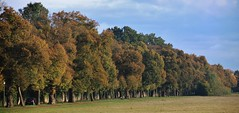 the autumn avenue (Hugo von Schreck) Tags: hugovonschreck landschaft outdoor germany wilhelmsbad hessen europe canoneos5dsr tamron28300mmf3563divcpzda010 fantasticnature