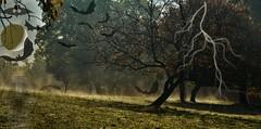 ~~ Il se passe de drles de choses dans ma pture !! ~~ (Jolisa) Tags: prairie brume octobre2016 effets halowen spectres chauvesouris clair lune moon