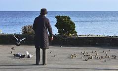 La dame aux oiseaux (Diegojack) Tags: oiseaux morges moineaux dame scnedevie pigeons