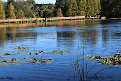 Lake Lily (ajensen415) Tags: lake florida peaceful brigde