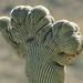 2016-10-14 Saguaro National Park 9
