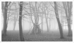 The Den (greeneyedlens) Tags: wendover den sticks branches play woods forest mist misty fog
