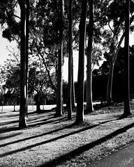 (yangzian_703) Tags: irvine california  us