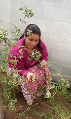 2016 Dora with peppers (Foods Resource Bank) Tags: foods resource bank food security income humanitarian guatemala indigenous women agriculture children greenhouses small business