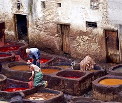 Where cats go to get their colours. (Jamie McCaffrey) Tags: cat chouaratannery color colour colouring feline fes fez fuji fujifilm hides leather morac morocco people tannery tuxedocat vats xt1 danger red brown