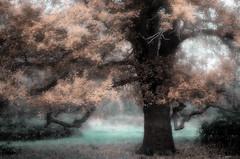 Magie naturelle (david49100) Tags: 2016 novembre2016 arbre d5100 feuilles leaves maineetloire nikon nikond5100 novembre rochefortsurloire tree