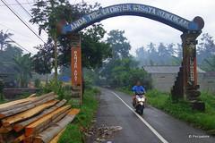 DSC07398 (Peripatete) Tags: bali ubud petulu nature birds travel tourism