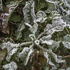 Erster Frost - 0005_Web (berni.radke) Tags: ersterfrost frost raureif wassertropfen rime eisblumen eiskristalle iceflowers icecrystals escarcha