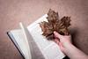 47/52 - A Leaf Out of My Book (Forty-9) Tags: playonwords eflens softbox project522016 week47 2016 yongnuospeedliteyn560iv photr 522016 strobist 28112016 yongnuo strobism canon studio 4752 aleafoutofmybook eos60d monday 52 ef50mmf18ii november book flash 28thnovember2016 project52 leaf