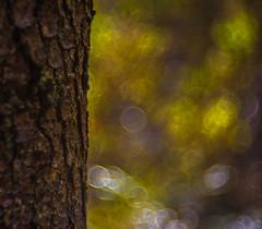 The Colors of Autumn in the Forest (*Capture the Moment*) Tags: 2016 autumn backlight backlit bavaria bayern bubblebokeh bubbles deutschland gegenlicht germany hackensee herbst lakehackensee meyergrlitztrioplan10028 meyeroptikgrlitztrioplan10028 seifenblasenbokeh sonya7m2 sonya7mii sonya7mark2 sonya7ii trioplan28100neo