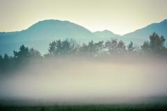 fog-cloud (camerito) Tags: cloud fog mist nebel bodennebel ground mountains berge bume silhouettes silhouetten camerito nikon1 j4 flickr austria sterreich landscape landschaft