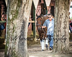 American Pharoah (EASY GOER) Tags: horses horse ny newyork sports race canon athletics track saratoga competition upstate running racing 5d athletes races spa thoroughbred equine thoroughbreds markiii