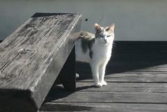 Cat (Paul McNamara) Tags: ireland cat wexford curracloe