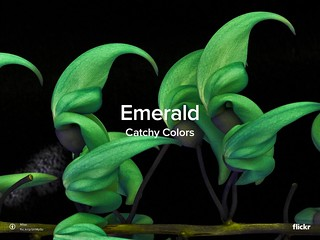 Catchy Colors: Emerald