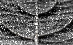 Night dew (Ingar H) Tags: autumn night leaf dew natt høst løv dugg