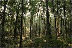 Gestern im Wald (2) (julia_HalleFotoFan) Tags: licht herbst jahreszeiten sonne wald