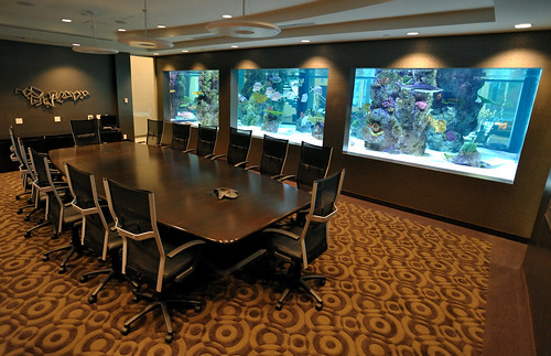 20,000 gal. SW Shark Exhibit - Corporate Office -  LYNY - 1