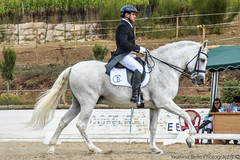 Toms Besada riding Tiberio II (yasminabelloargibay) Tags: horse caballo cheval grey bay mare pony pre chestnut horseshow cavalo pferd equestrian trot stallion canter equine hest andalusian paard doma dressage horserider gelding dapplegrey equestrianism equitacion dmaclasica