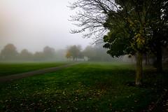 foggypark (Steve J Cottis) Tags: park trees fog dartford tokina1116mm28 nikond5300