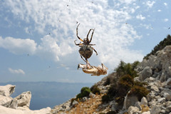Croatia is full of hungry spiders (Monalisi) Tags: sea sky cloud net beauty clouds spider hiking croatia prey