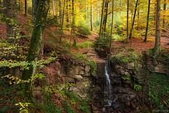 forest of tranquility (Ralph Oechsle) Tags: autumn creek forest waterfall wasserfall magic herbst bach langenberg welzheim forellensprung wannenbach burgsteigklingenbach