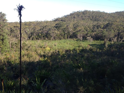 Calga Hanging Swamp - Brisbane Water National Park