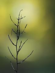 Désintégration (Titole) Tags: dry plant bokeh shallowdof green titole nicolefaton friendlychallenge