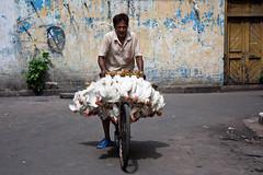 intentando elevarse (matiasleturiaphotos) Tags: india calcuta agosto2012