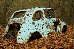 Hanno beccato Lupin! (mttdlp) Tags: car fiat 500 autunno lupin bosco d3200