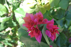 "Local flora • <a style=""font-size:0.8em;"" href=""http://www.flickr.com/photos/99775553@N08/23182836850/"" target=""_blank"">View on Flickr</a>"
