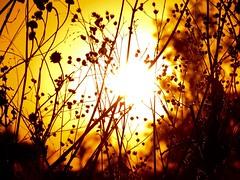 luz, fuerte atraccin (jvcluis) Tags: sunset luz sol nature flickr 10 aos fuerte atraccion