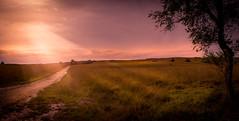 Heide (Pieter Ott) Tags: nature netherlands landscape arnhem heide rozendaal