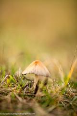 Champignon sur le chemin en fort (edouardclaisse) Tags: nature couleur fort champignon 135mmf2l 5ds canon5ds