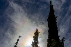 cypresses in backlight (ToDoe) Tags: sky backlight clouds israel wolken cypress negev cypresses contrejour gegenlicht zypresse zypressen