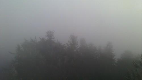 Hutwisch im Nebel 6