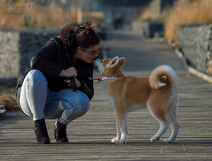 DSC_0115 (stphanielegay) Tags: dog chien dogs animal puppy photography photo nikon kiss photographie bisou hugs 70300mm animaux akita chiot complicity chiens baiser inu complicit calin chiots akitainu nikon3200 bisous canin chienjaponais dogsphotography photoanimal