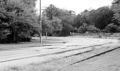 Road and rail 8839 (Tangled Bank) Tags: gainesville florida road train railroad railway bandoned rail trackage track csx csxt spur siding