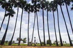 @ Anthiyur (Madhusudanan Parthasarathy) Tags: anthiyur erode tamilnadu india incredibleindia village villagelife tress sky man walking street streetphotography nikon d750 madhusudananparthasarathy minimalism cwc chennai chennaiweekendclickers cwc547