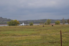 Towboat Cows & Ohio River_0023 (Porch Dog) Tags: 2016 garywhittington nikond7000 nikon18300mm november towboat cows livestock ohioriver kentucky